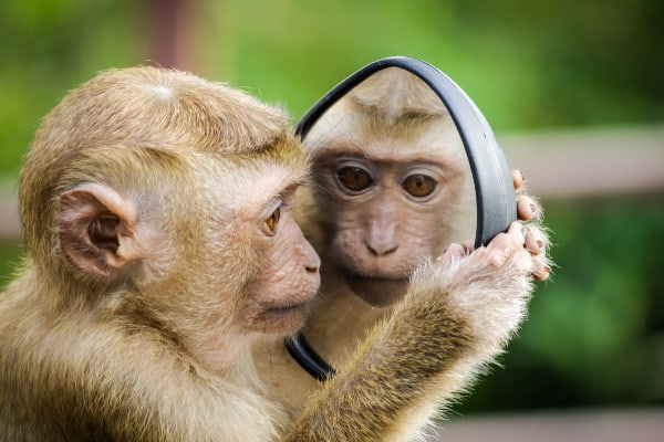 monkey looking in a mirror-finding motivation to exercise at home