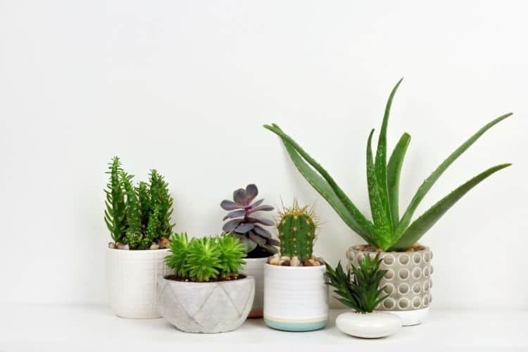 5 plants-home office tips to get more clients